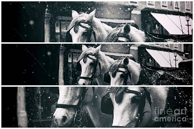 Photograph - Two Horse Panels by John Rizzuto