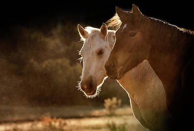 Two Horse Portraits In Soft Backlight Print by Sheila Haddad