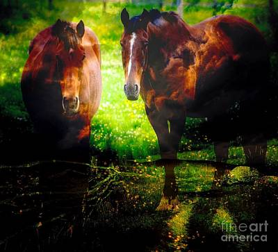 Photograph - Two Horses by Annie Zeno