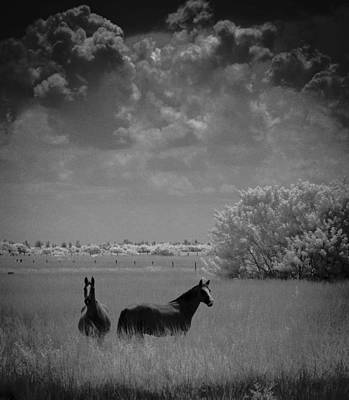Photograph - Two Horses by Bradley R Youngberg