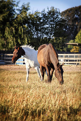 Photograph - Two Horses by Caitlyn  Grasso