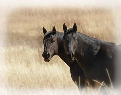 Photograph - Two Horses by Ernie Echols