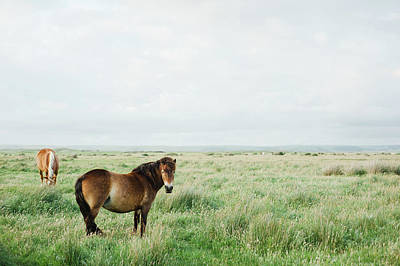 Two Horses In Field Art Print by Suzanne Marshall