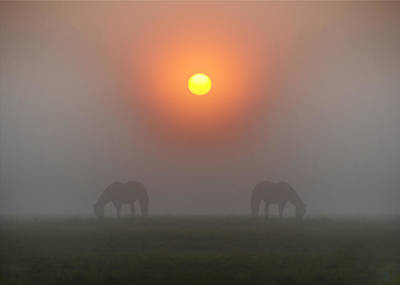 Two Horses In The Foggy Sun Art Print by Bill Cannon