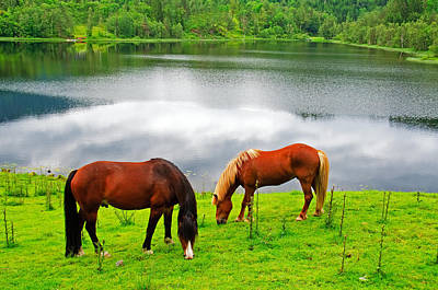 Summer Photograph - Two Horses On A Meadow by Gry Thunes