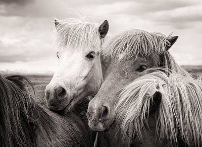 Two Horses Photograph - Two Icelandic Horses Sepia Photo by Matthias Hauser