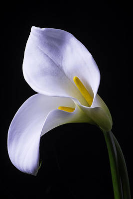 Calla Lily Wall Art - Photograph - Two In Love by Garry Gay