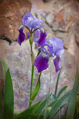 Digital Art - Two Irises by Melinda Fawver