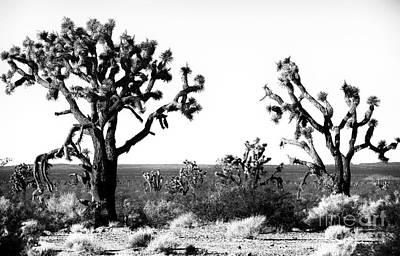 Photograph - Two Joshua Trees by John Rizzuto