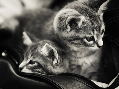 Photograph - Two Kittens In The Bag by Jenny Rainbow