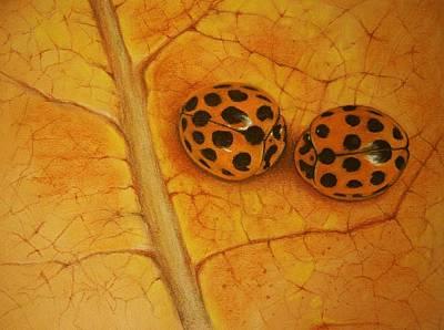 Ladybug Drawing - Two Ladybugs Whispering by Amani Warrington