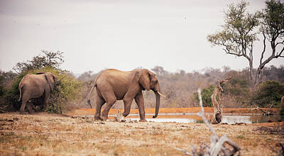 Two Large Elephants Approaching A Art Print by Wundervisuals