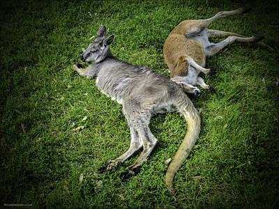 Kangaroo Photograph - Two Lazy Kangaroos Lying Down by LeeAnn McLaneGoetz McLaneGoetzStudioLLCcom