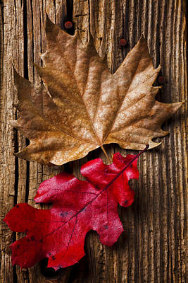 Two Leafs  Art Print by Garry Gay