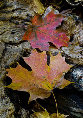 Two Leaves Art Print by Larry Bohlin