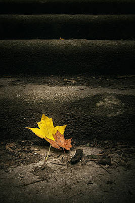 Maple Season Photograph - Two Leaves On A Staircase by Scott Norris