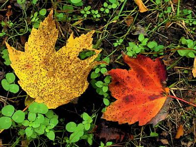 Two Leaves Art Print