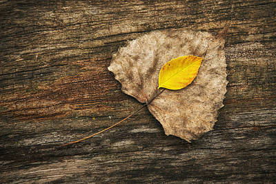 Stump Photograph - Two Leaves  by Scott Norris