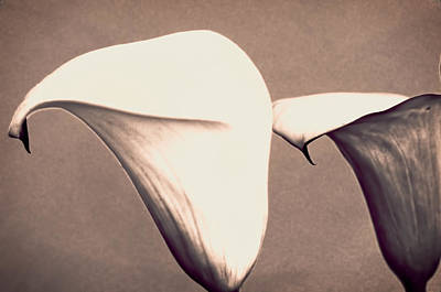 Photograph - Two Lilies In Sepia by Charles Muhle