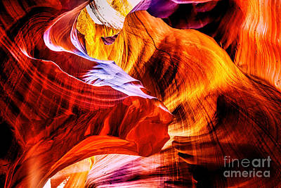 Antelope Wall Art - Photograph - Two Lions Dance by Az Jackson