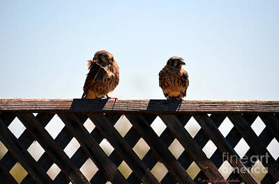 Photograph - Two Little Birds Sitting On A Fence by Afroditi Katsikis