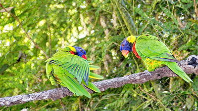 Photograph - Two Macaws by Simply  Photos
