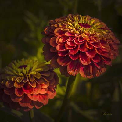 Photograph - Two Magellan Zinnias by Julie Palencia