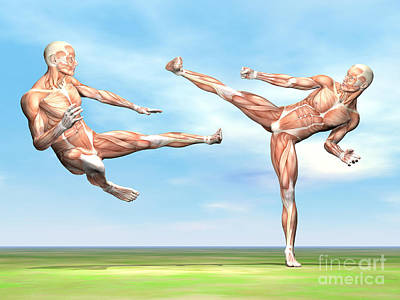 Kung Digital Art - Two Male Musculatures Fighting Martial by Elena Duvernay