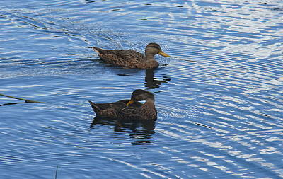 Photograph - Two Mallard Ducks by Denise Mazzocco