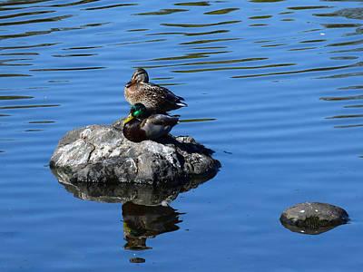 Photograph - Two Mallard Ducks by Michele Avanti