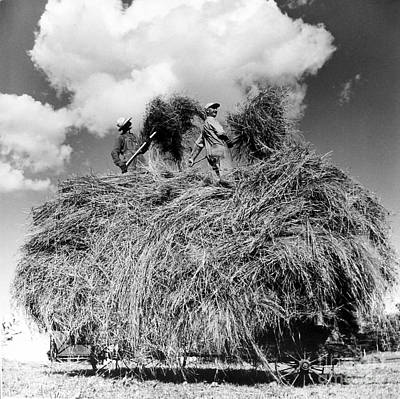 Photograph - Two Men Putting Up Hay by Joan Liffring-Zug Bourret