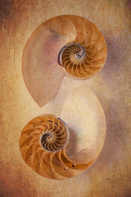 Warm Tones Photograph - Two Nautilus Shells by Garry Gay