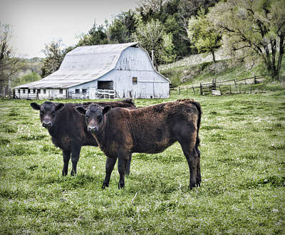 Barn Lots Photograph - Two Of A Kind by Cricket Hackmann