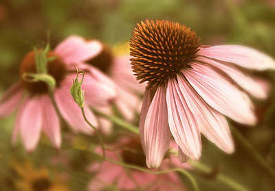 Echinacea Photograph - Two Of A Kind by Jessica Jenney