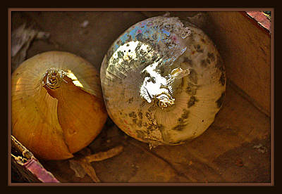 Photograph - Two Onions by Mary Frances