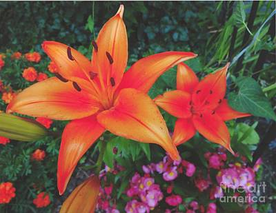 Photograph - Two Orange Asiatic Lilies by Rod Ismay