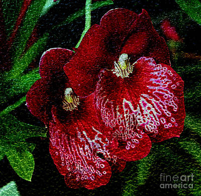 Photograph - Two Orchids by Elizabeth Winter