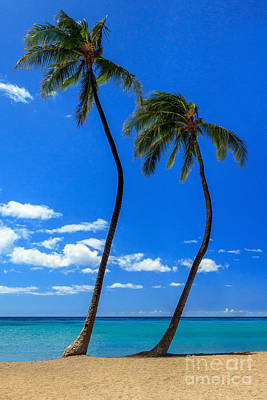 Photograph - Two Palms In Hawaii by James Eddy