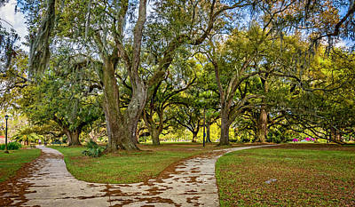 Path Photograph - Two Paths Diverged In A Live Oak Wood...  by Steve Harrington