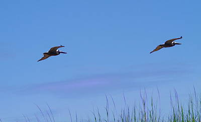 Bird Photograph - Two Pelicans In Flight 2 by Cathy Lindsey