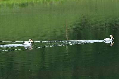 Photograph - Two Pelicans On Lake by Marilyn Burton