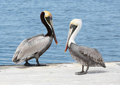 Photograph - Two Pier Pelican by Carol Groenen