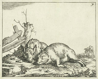 Fence Drawing - Two Pigs Lying Near A Fence, Marcus De Bye by Marcus De Bye And Paulus Potter