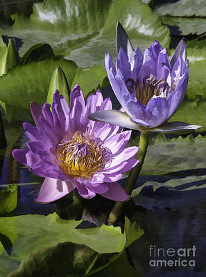 Photograph - Two Pink And Purple Lilies by Sharon Foster