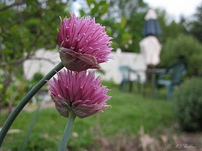 Photograph - Two Pink Chives by MTBobbins Photography