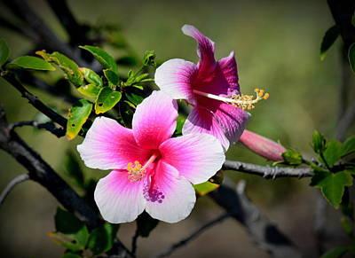 Two Pink Hibiscus Original