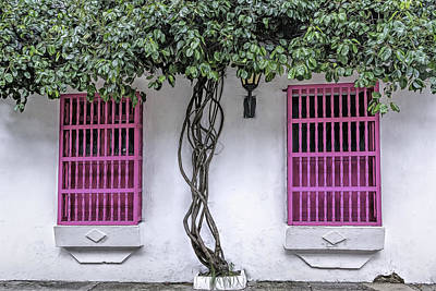 Photograph - Pink Windows by Maria Coulson