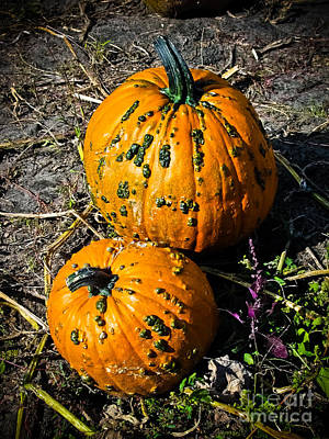Photograph - Two Pumpkins by Colleen Kammerer
