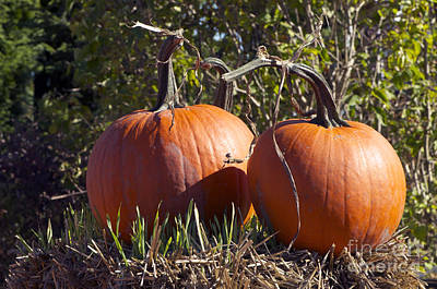 Photograph - Two Pumpkins by Sharon Talson