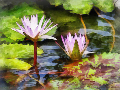 Photograph - Two Purple Water Lotus by Susan Savad